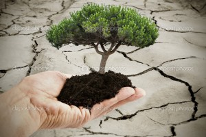 hands and dry land with tree background