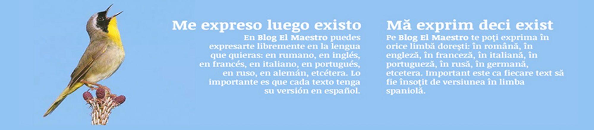 Blog El Maestro®